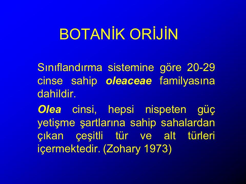 BOTANİK ORİJİN Sınıflandırma sistemine göre 20-29 cinse sahip oleaceae familyasına dahildir.