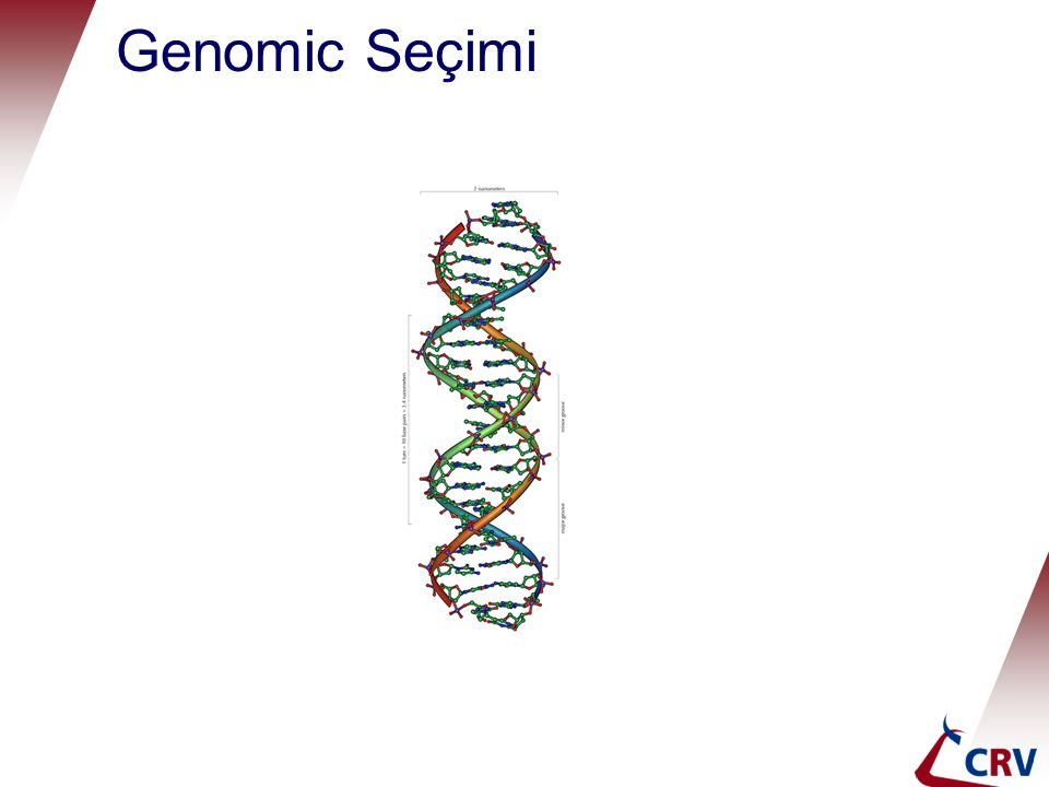 Genomic Seçimi