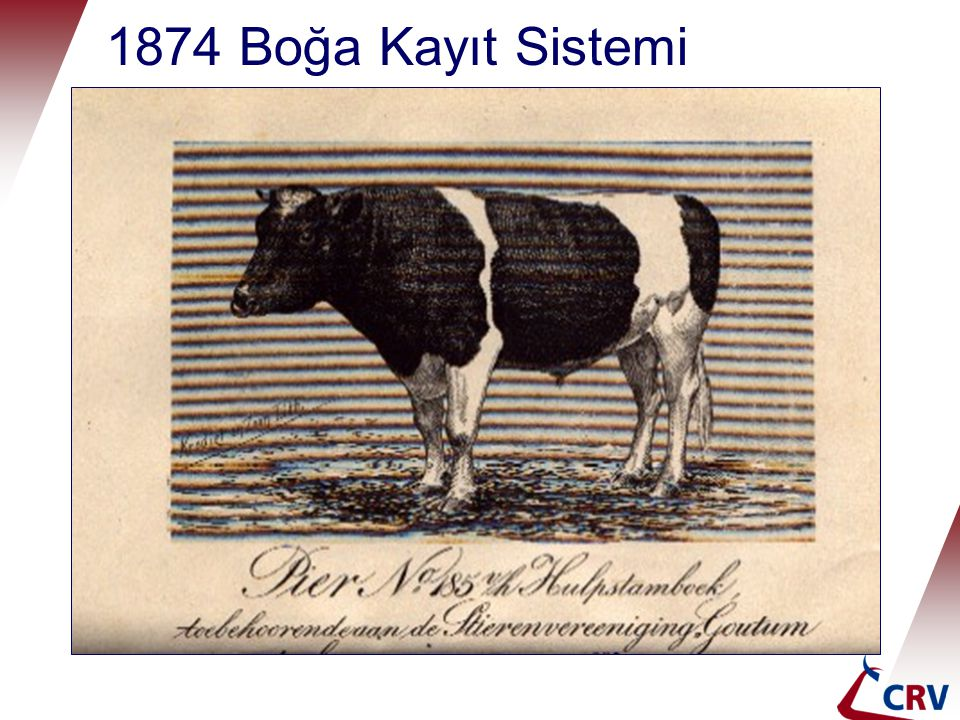 1874 Boğa Kayıt Sistemi