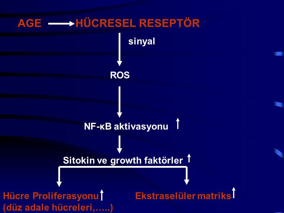 AGE HÜCRESEL RESEPTÖR sinyal ROS NF-κB aktivasyonu