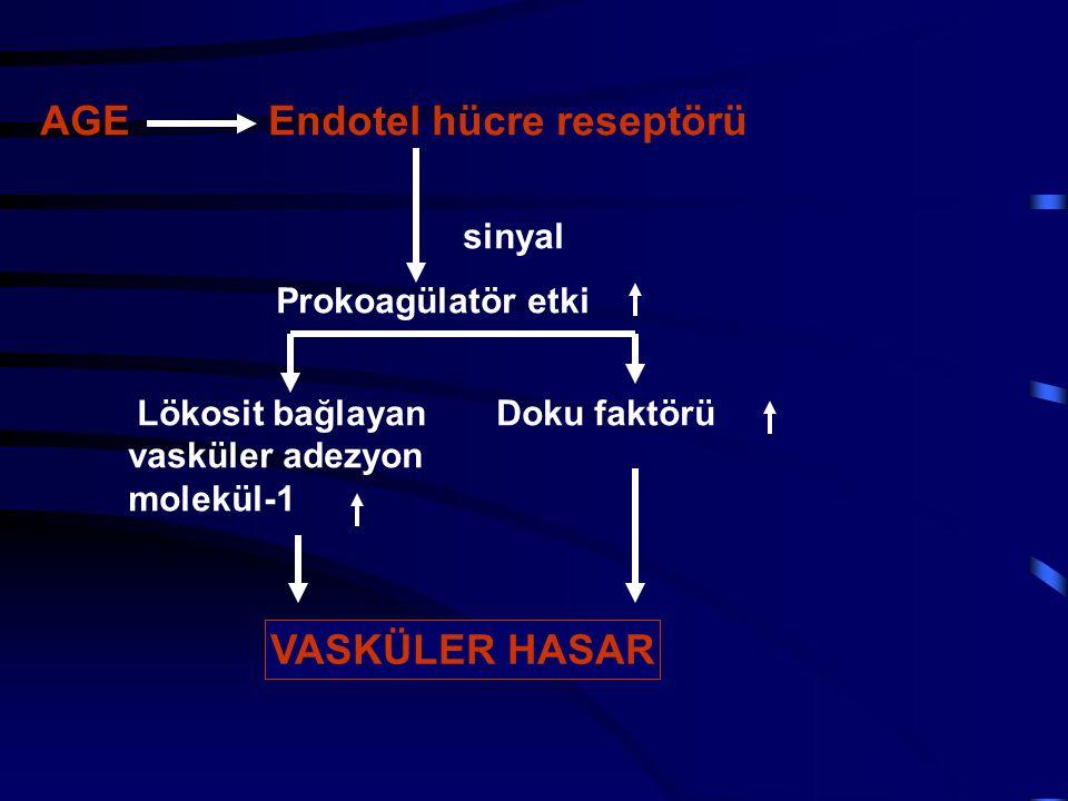 AGE Endotel hücre reseptörü