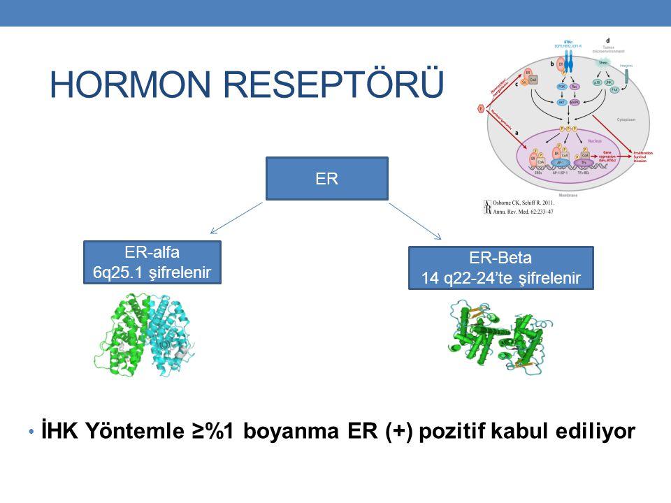 HORMON RESEPTÖRÜ İHK Yöntemle ≥%1 boyanma ER (+) pozitif kabul ediliyor. ER. ER-alfa. 6q25.1 şifrelenir.
