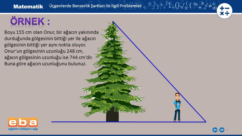 ÖRNEK : Boyu 155 cm olan Onur, bir ağacın yakınında