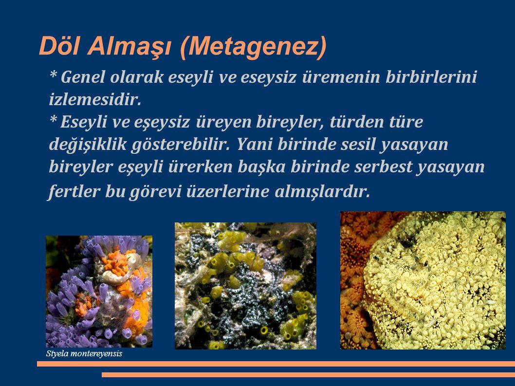 Döl Almaşı (Metagenez)
