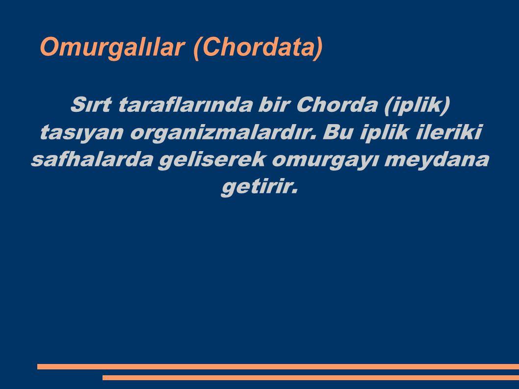 Omurgalılar (Chordata)