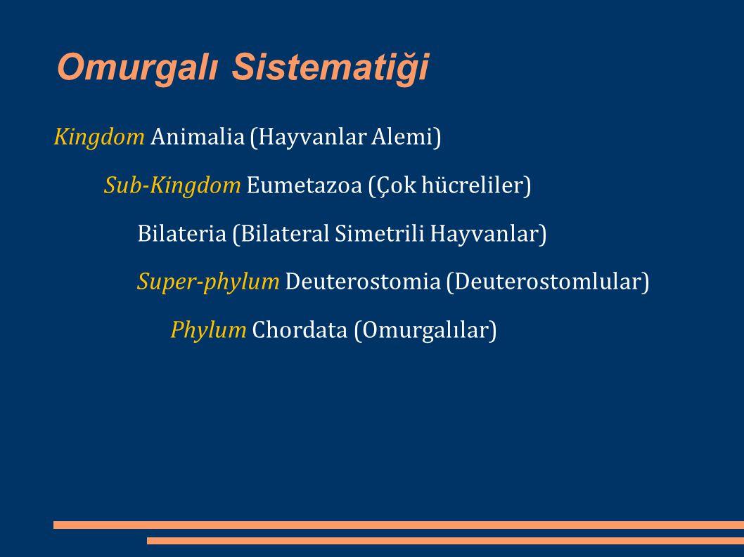 Omurgalı Sistematiği Kingdom Animalia (Hayvanlar Alemi)
