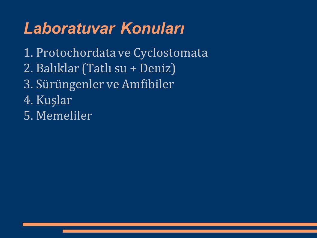 Laboratuvar Konuları 1. Protochordata ve Cyclostomata