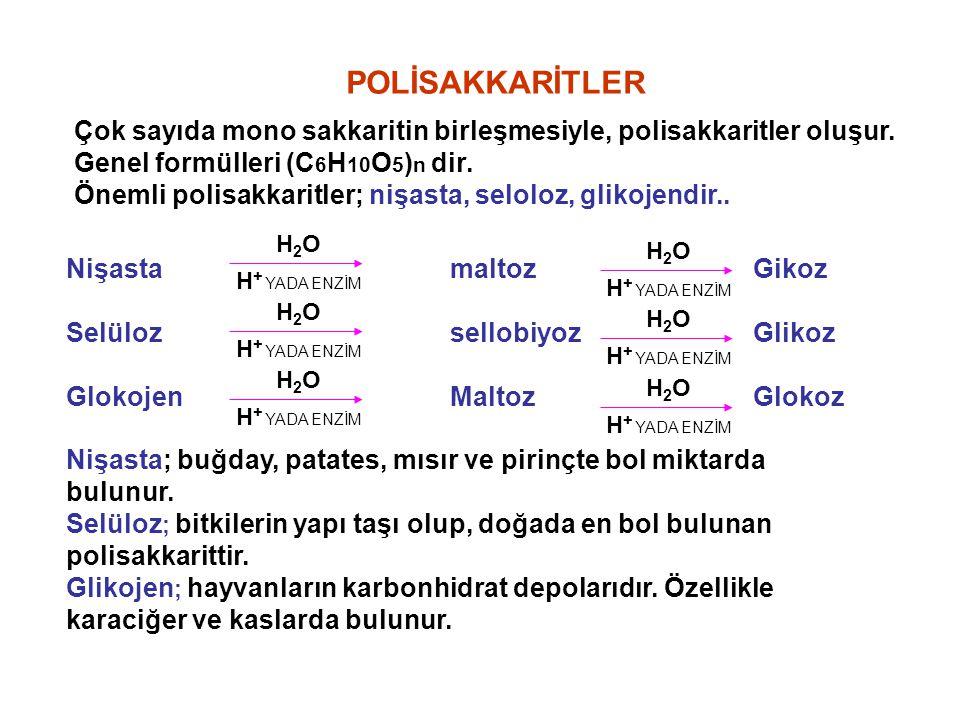 POLİSAKKARİTLER Çok sayıda mono sakkaritin birleşmesiyle, polisakkaritler oluşur. Genel formülleri (C6H10O5)n dir.