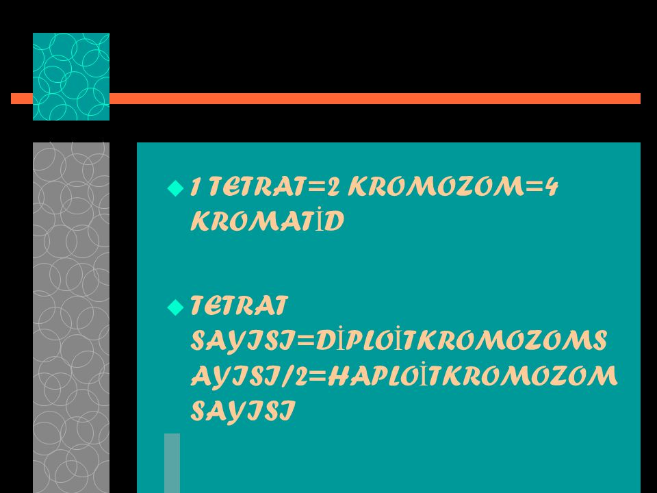 1 TETRAT=2 KROMOZOM=4 KROMATİD