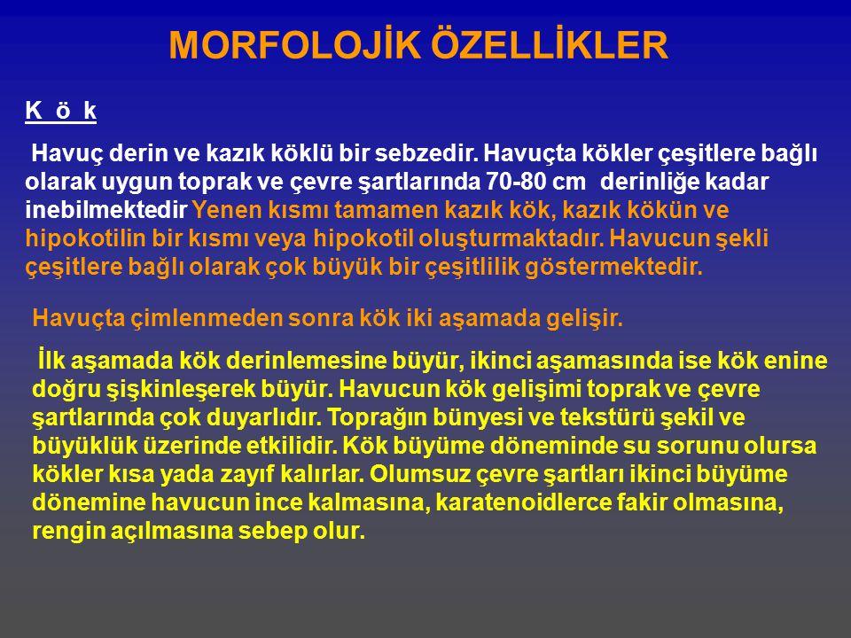 MORFOLOJİK ÖZELLİKLER