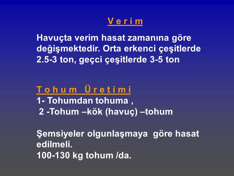 V e r i m Havuçta verim hasat zamanına göre değişmektedir. Orta erkenci çeşitlerde 2.5-3 ton, geçci çeşitlerde 3-5 ton.