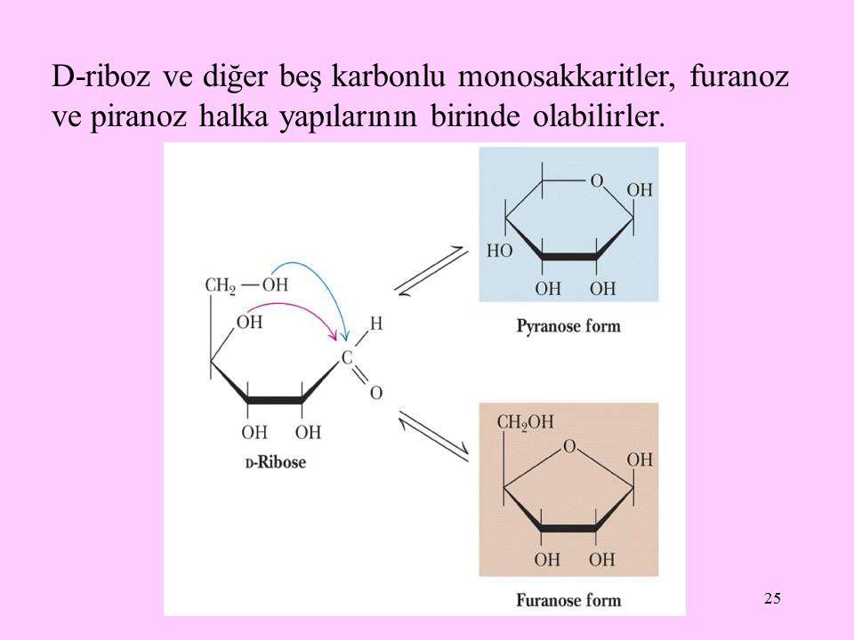D-riboz ve diğer beş karbonlu monosakkaritler, furanoz ve piranoz halka yapılarının birinde olabilirler.