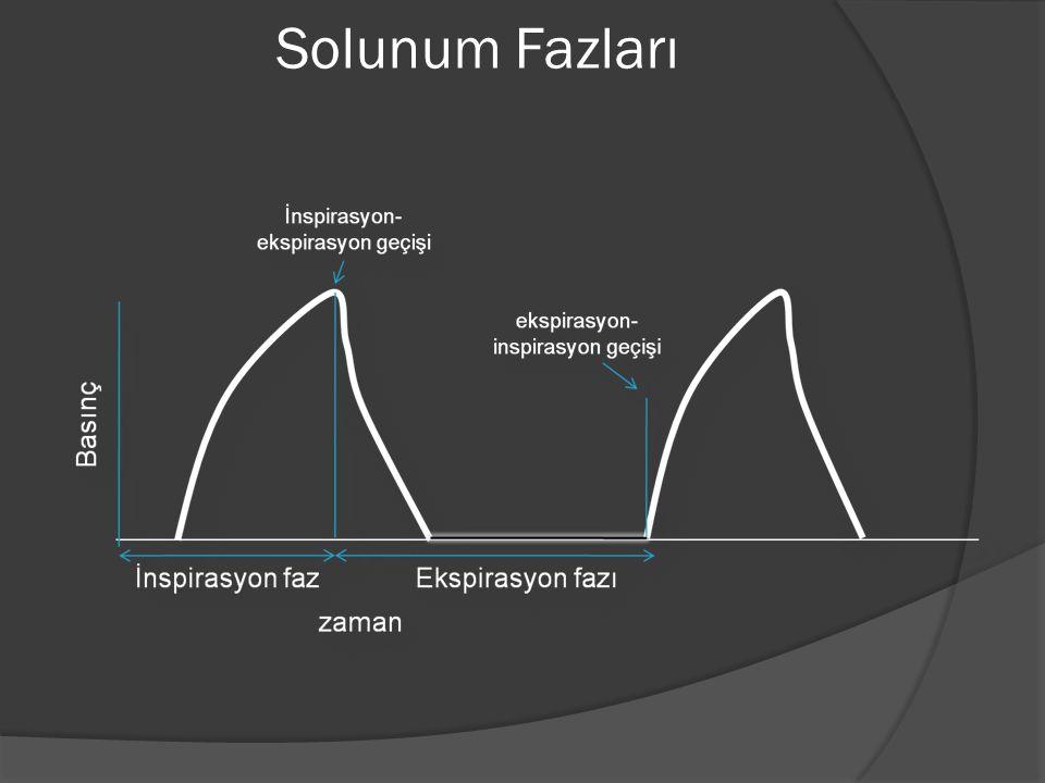 Solunum Fazları