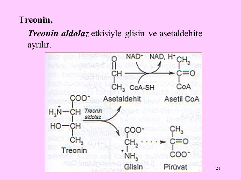 Treonin, Treonin aldolaz etkisiyle glisin ve asetaldehite ayrılır.