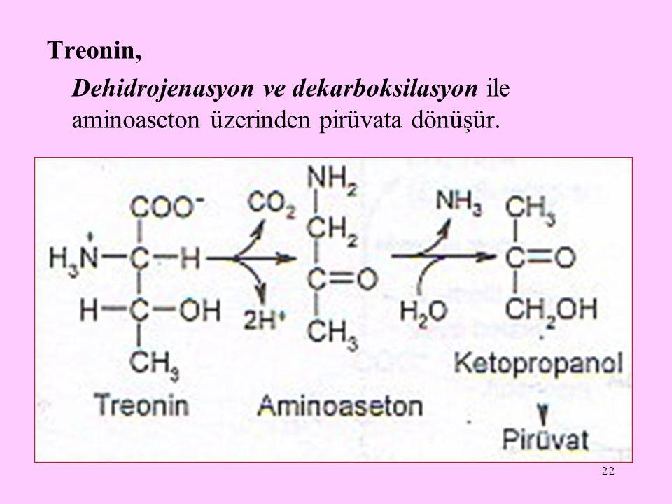 Treonin, Dehidrojenasyon ve dekarboksilasyon ile aminoaseton üzerinden pirüvata dönüşür.