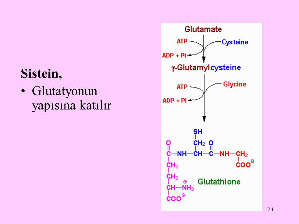 Sistein, Glutatyonun yapısına katılır