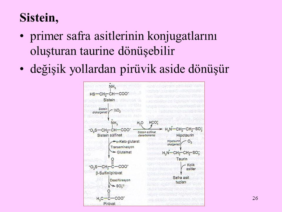 Sistein, primer safra asitlerinin konjugatlarını oluşturan taurine dönüşebilir.