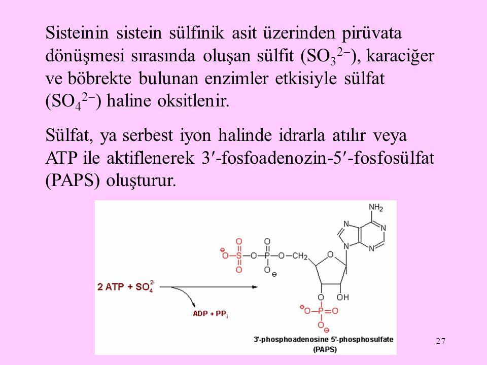 Sisteinin sistein sülfinik asit üzerinden pirüvata dönüşmesi sırasında oluşan sülfit (SO32), karaciğer ve böbrekte bulunan enzimler etkisiyle sülfat (SO42) haline oksitlenir.