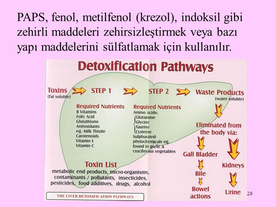 PAPS, fenol, metilfenol (krezol), indoksil gibi zehirli maddeleri zehirsizleştirmek veya bazı yapı maddelerini sülfatlamak için kullanılır.