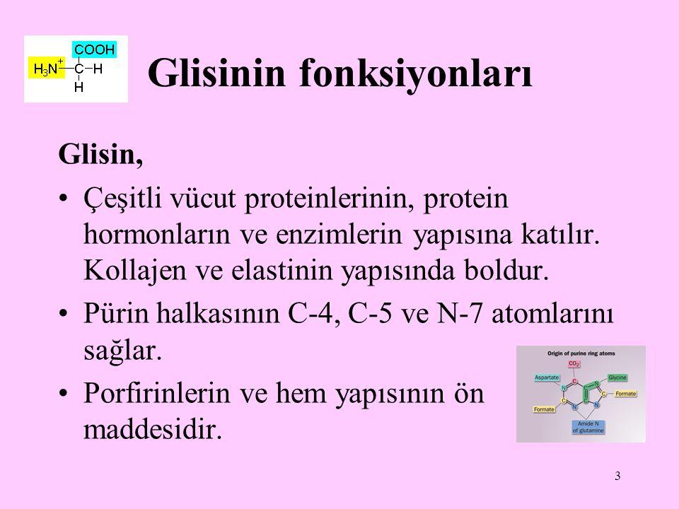 Glisinin fonksiyonları