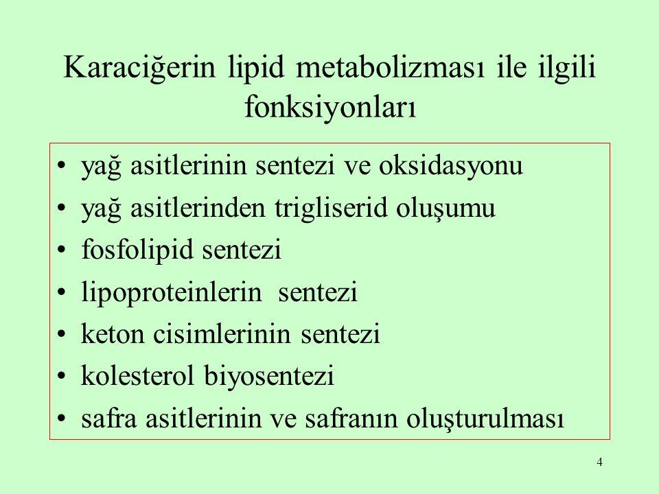 Karaciğerin lipid metabolizması ile ilgili fonksiyonları