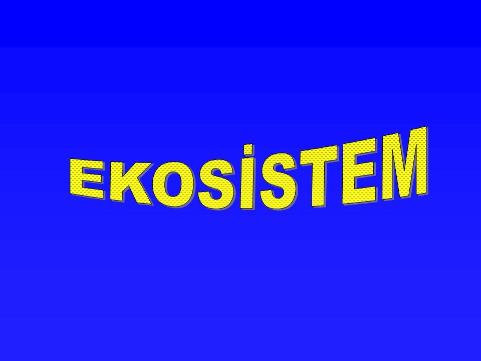 EKOSİSTEM