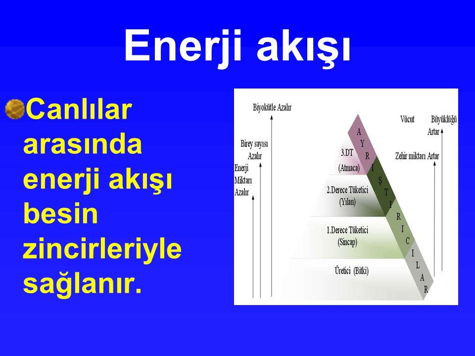 Enerji akışı Canlılar arasında enerji akışı besin zincirleriyle sağlanır.