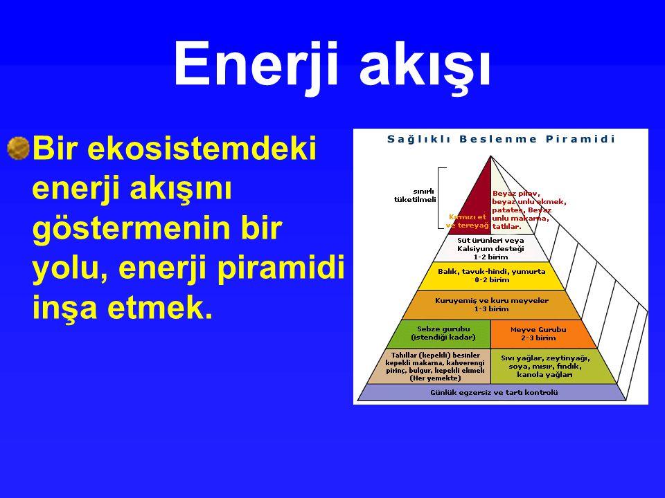 Enerji akışı Bir ekosistemdeki enerji akışını göstermenin bir yolu, enerji piramidi inşa etmek.