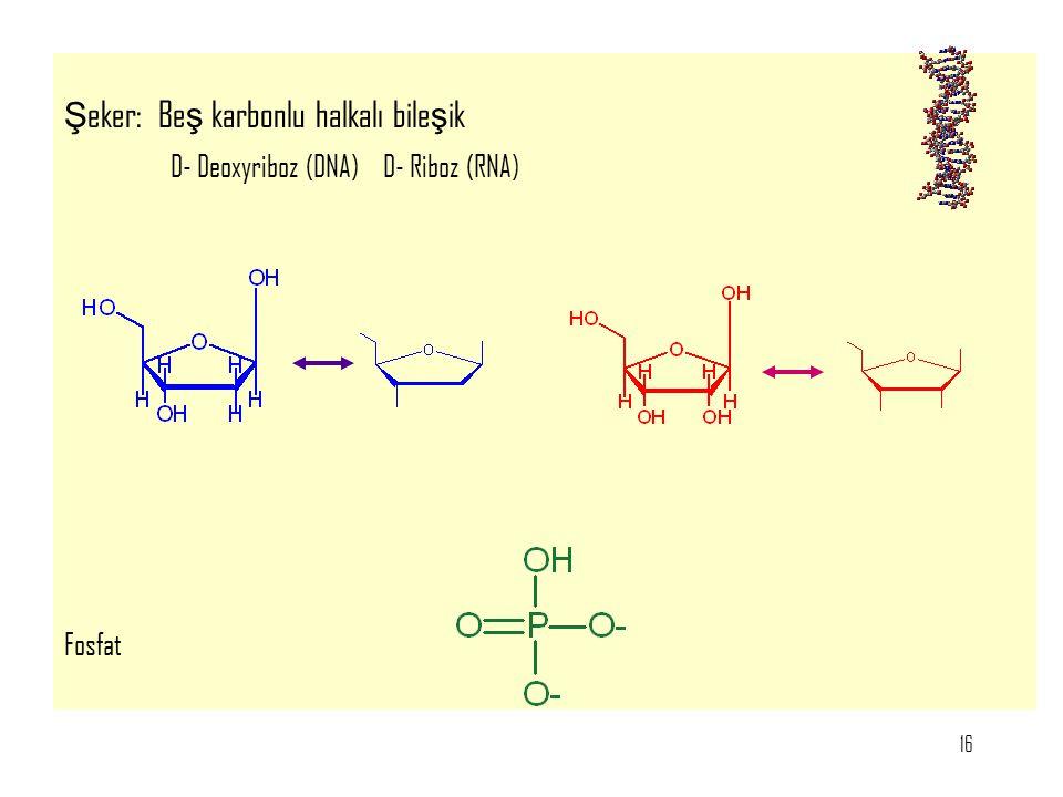 Şeker: Beş karbonlu halkalı bileşik