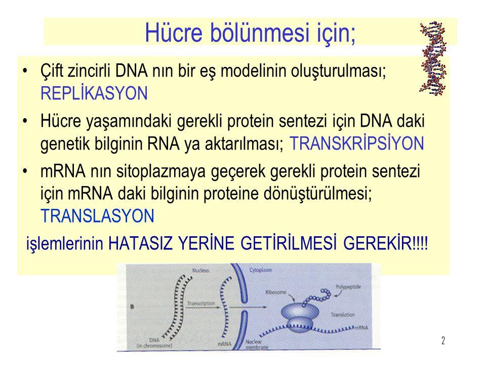 Hücre bölünmesi için; Çift zincirli DNA nın bir eş modelinin oluşturulması; REPLİKASYON.