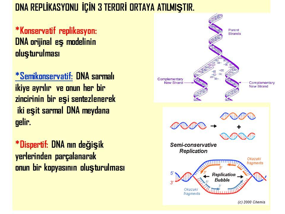 DNA REPLİKASYONU İÇİN 3 TERORİ ORTAYA ATILMIŞTIR.
