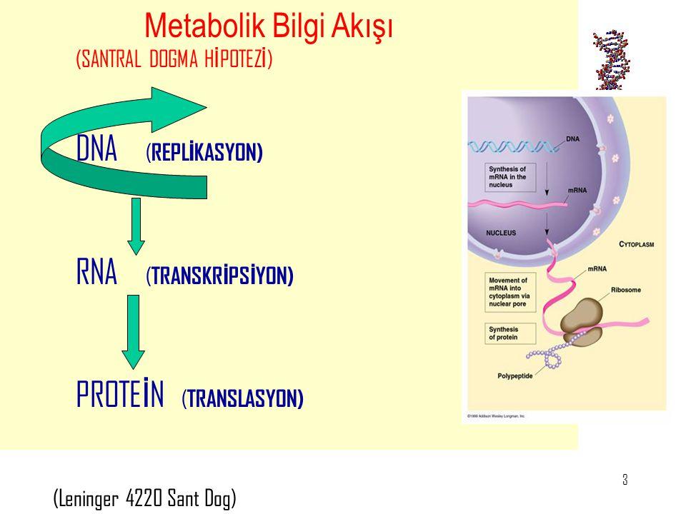 DNA (REPLİKASYON) Metabolik Bilgi Akışı (SANTRAL DOGMA HİPOTEZİ)