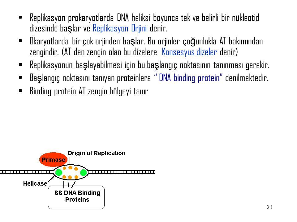 Replikasyon prokaryotlarda DNA heliksi boyunca tek ve belirli bir nükleotid dizesinde başlar ve Replikasyon Orjini denir.