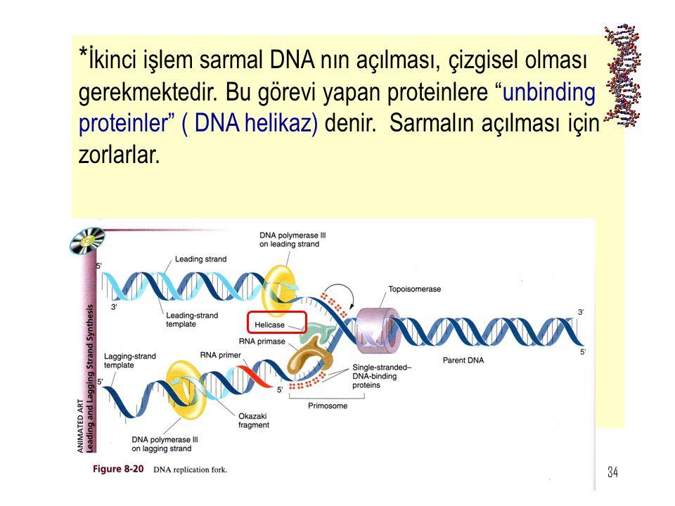İkinci işlem sarmal DNA nın açılması, çizgisel olması gerekmektedir