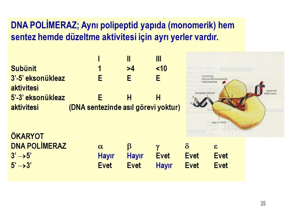 DNA POLİMERAZ; Aynı polipeptid yapıda (monomerik) hem sentez hemde düzeltme aktivitesi için ayrı yerler vardır.
