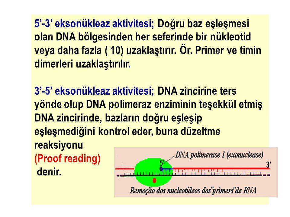 5'-3' eksonükleaz aktivitesi; Doğru baz eşleşmesi olan DNA bölgesinden her seferinde bir nükleotid veya daha fazla ( 10) uzaklaştırır. Ör. Primer ve timin dimerleri uzaklaştırılır.