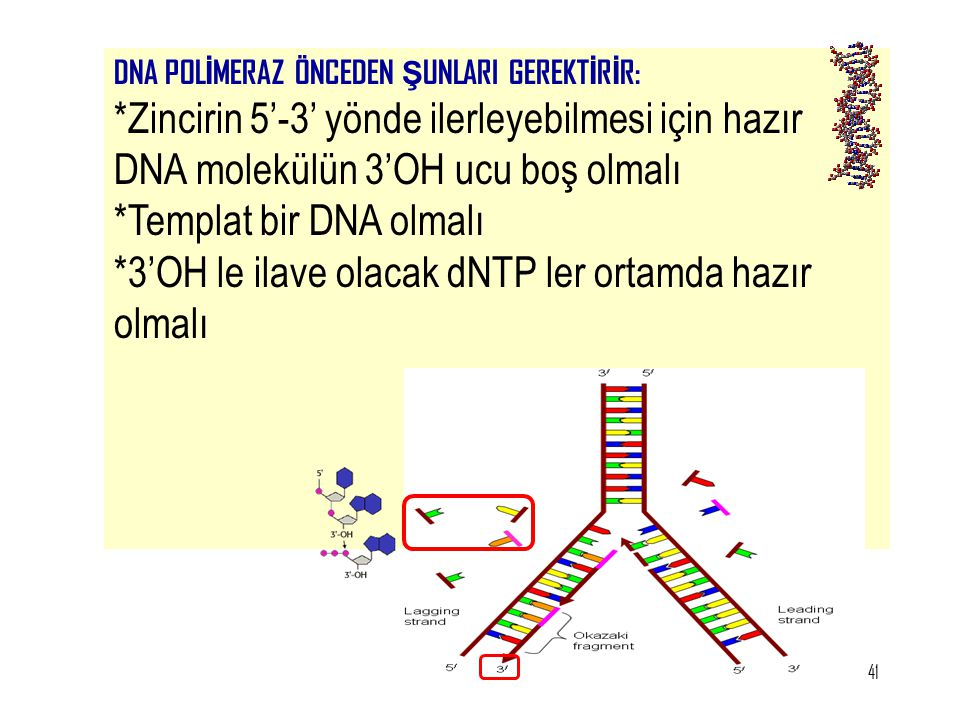 *Templat bir DNA olmalı