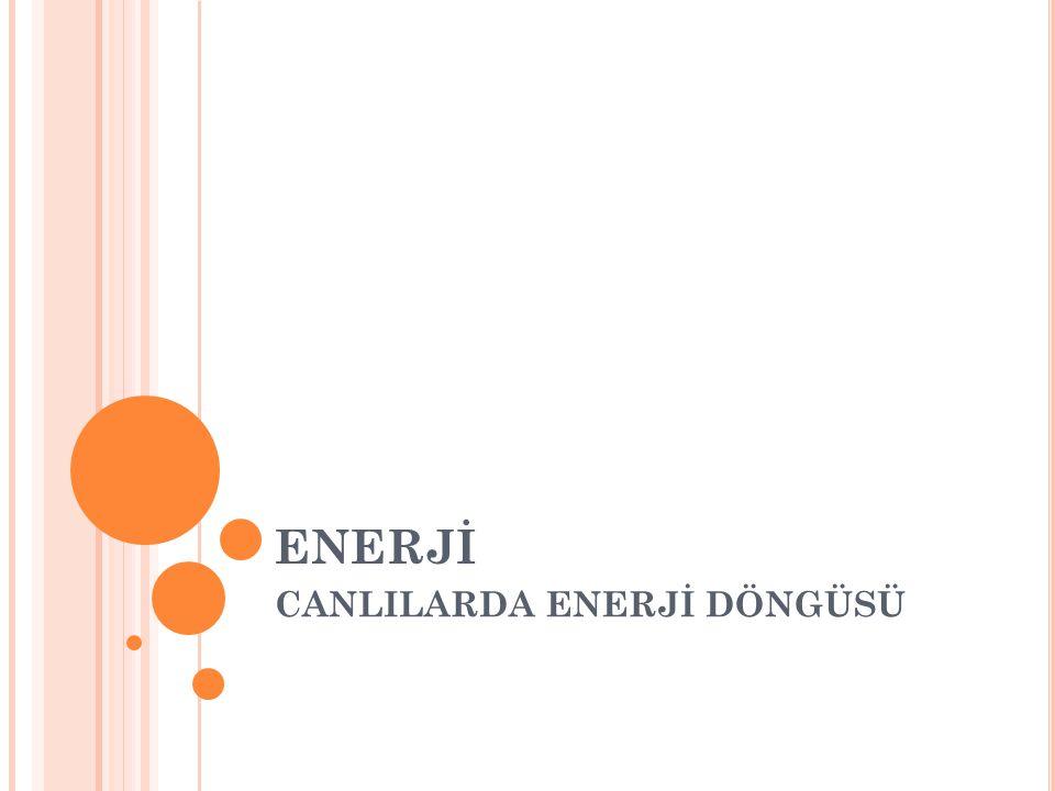CANLILARDA ENERJİ DÖNGÜSÜ