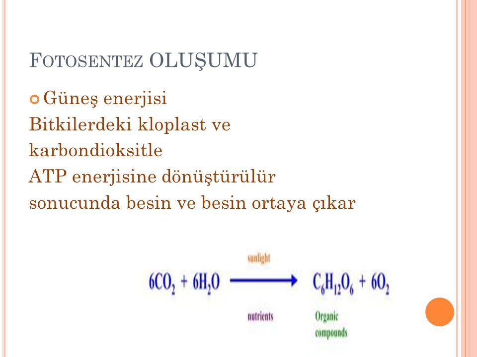 Fotosentez OLUŞUMU Güneş enerjisi Bitkilerdeki kloplast ve