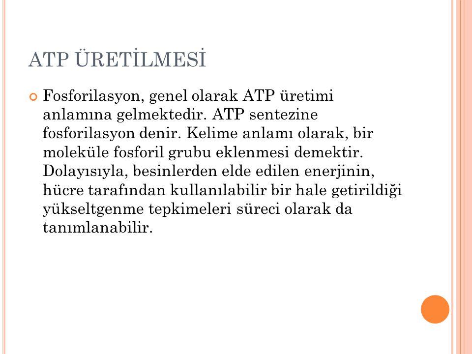 ATP ÜRETİLMESİ