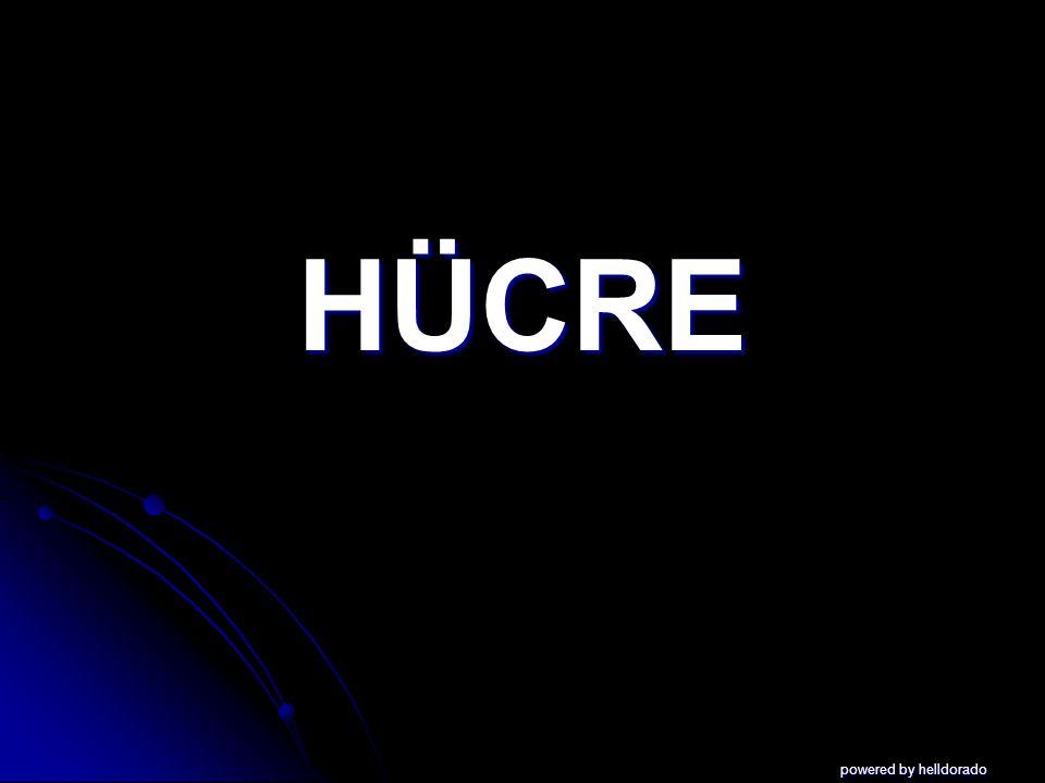 HÜCRE powered by helldorado