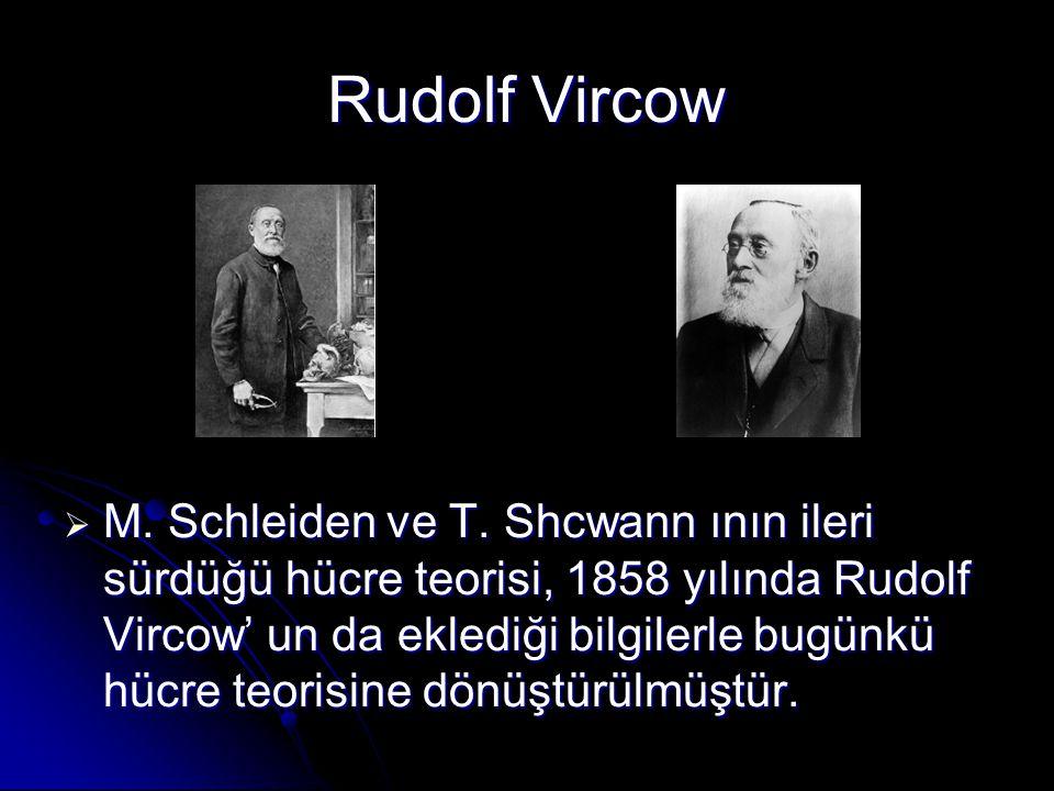 Rudolf Vircow