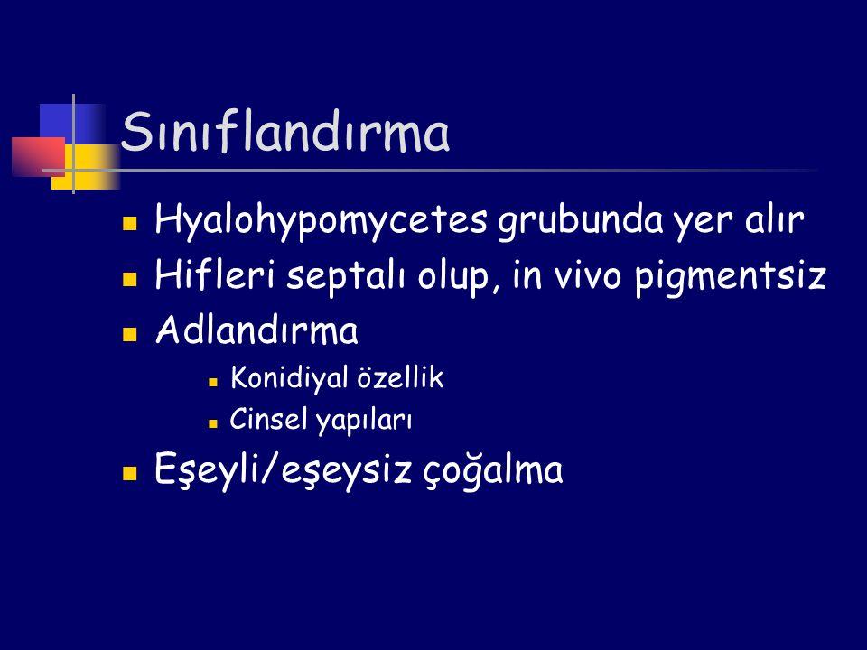 Sınıflandırma Hyalohypomycetes grubunda yer alır
