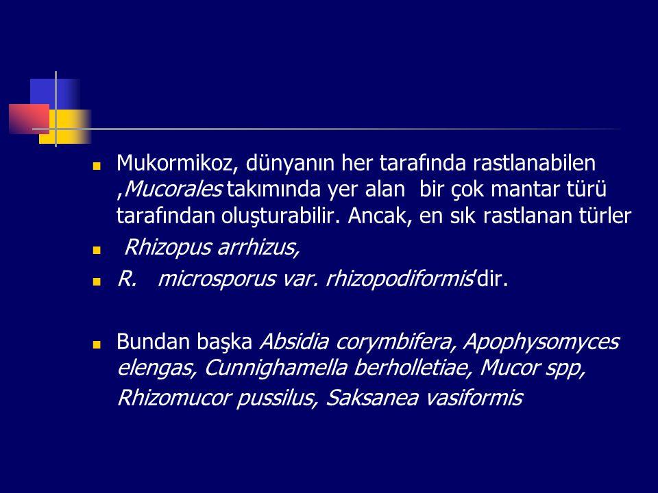 Mukormikoz, dünyanın her tarafında rastlanabilen ,Mucorales takımında yer alan bir çok mantar türü tarafından oluşturabilir. Ancak, en sık rastlanan türler