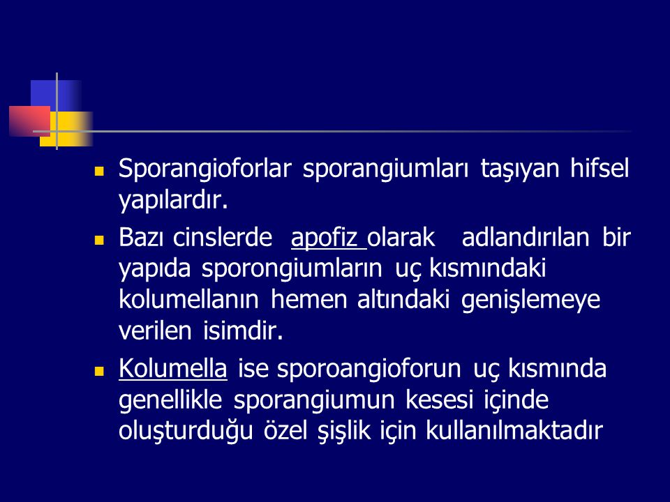Sporangioforlar sporangiumları taşıyan hifsel yapılardır.