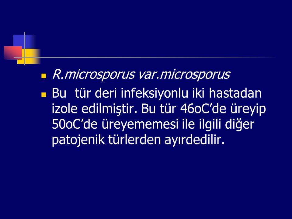 R.microsporus var.microsporus