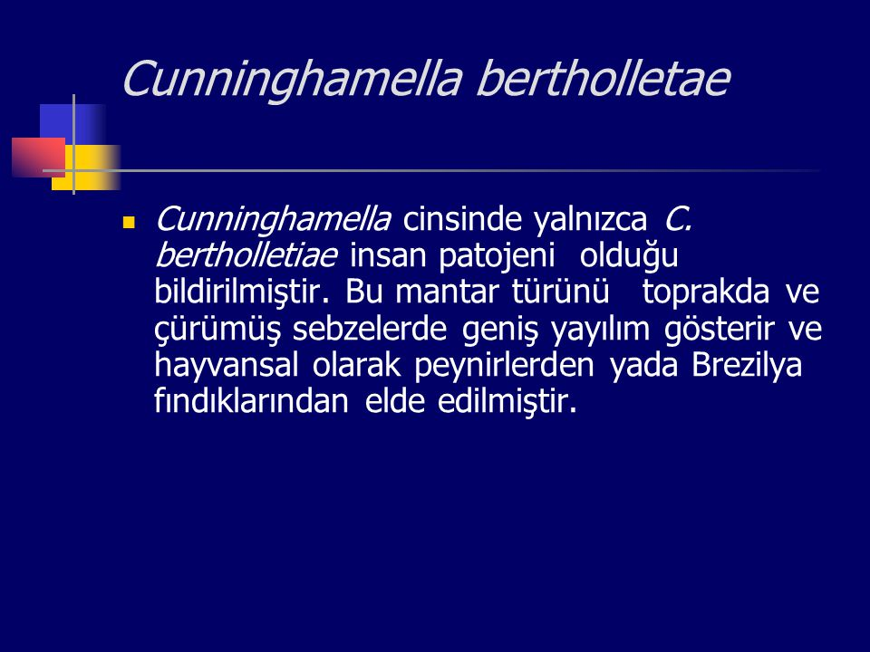 Cunninghamella bertholletae