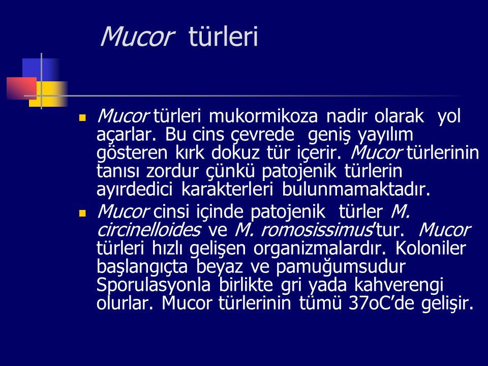 Mucor türleri