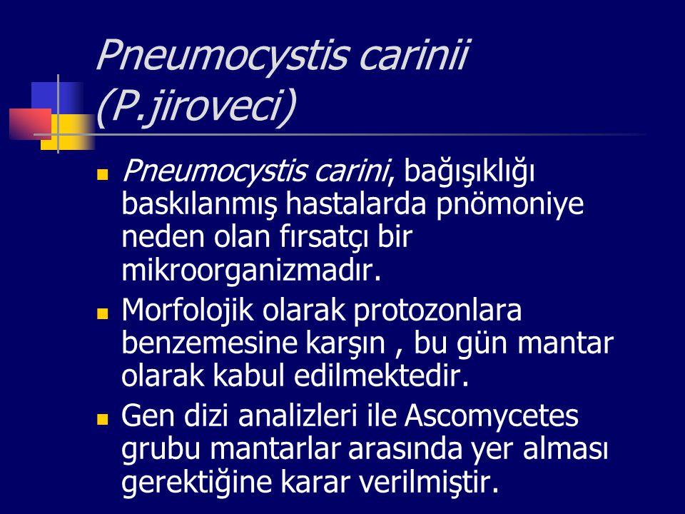 Pneumocystis carinii (P.jiroveci)