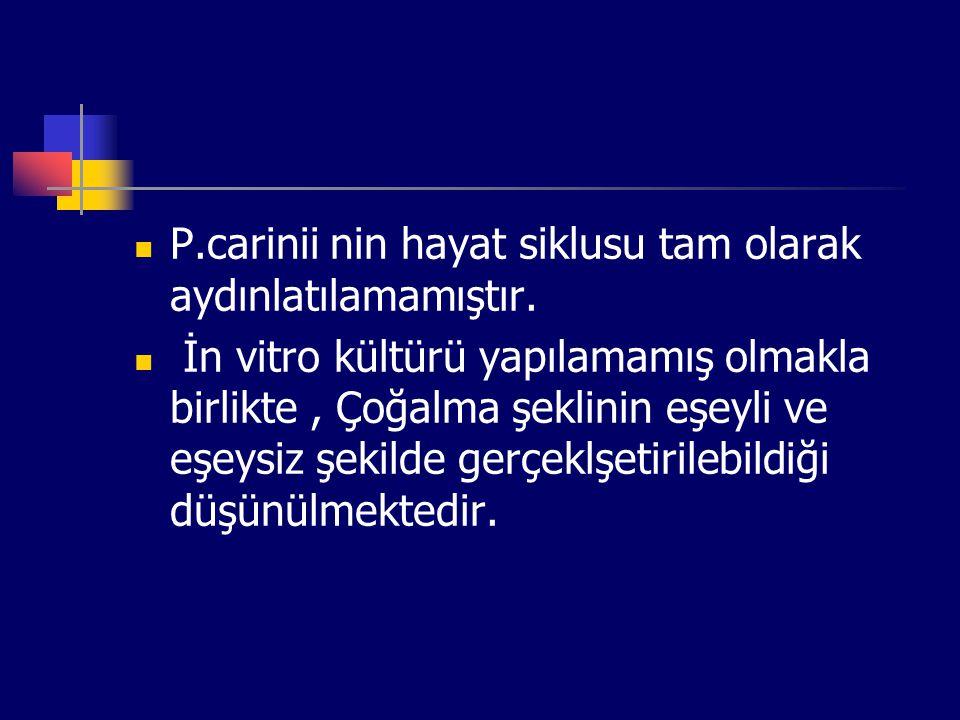 P.carinii nin hayat siklusu tam olarak aydınlatılamamıştır.